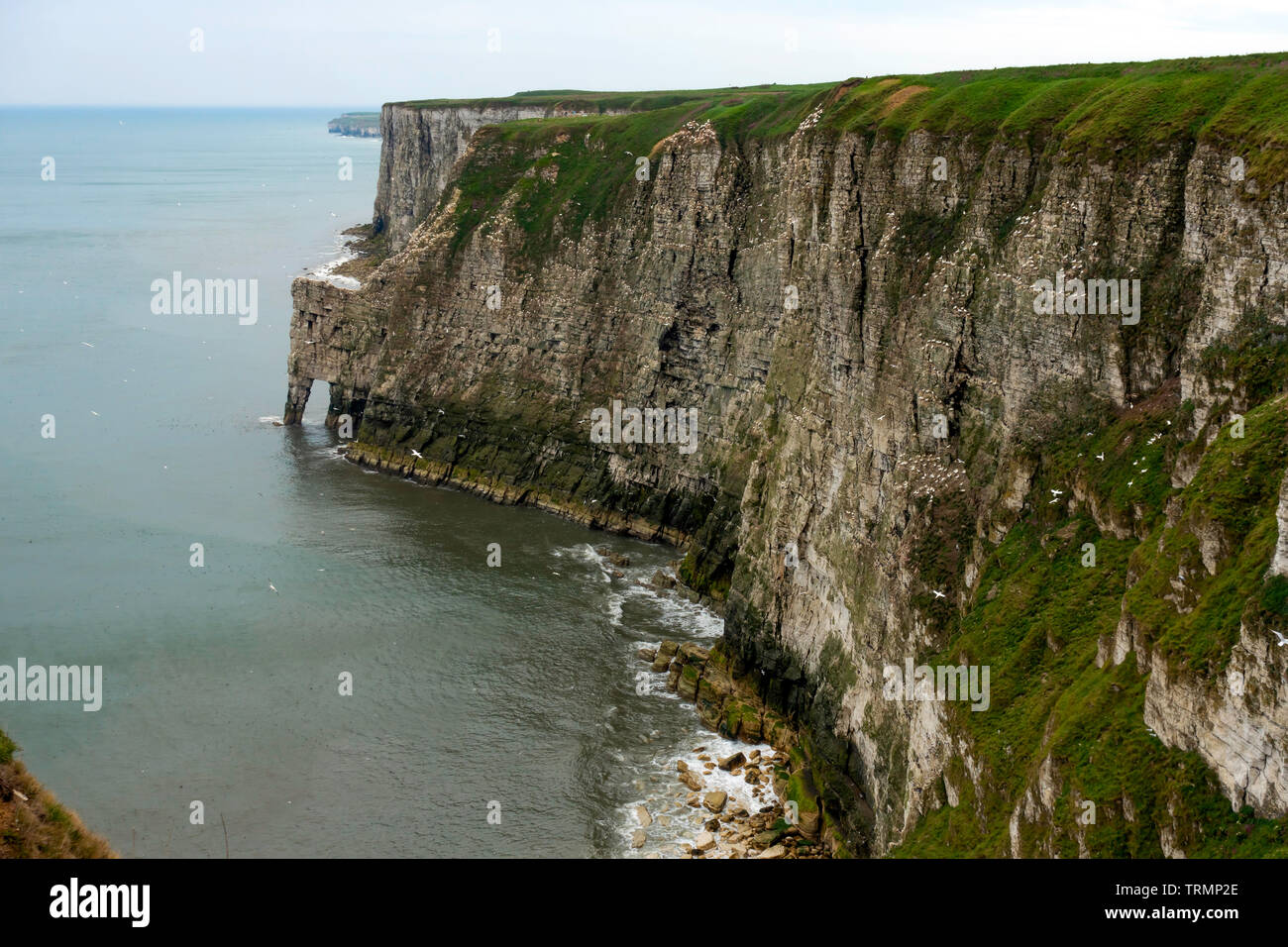 The view from the RSPB Bempton Cliffs Nature Reserve  from the Bartlett Nab viewpoint - Stock Image
