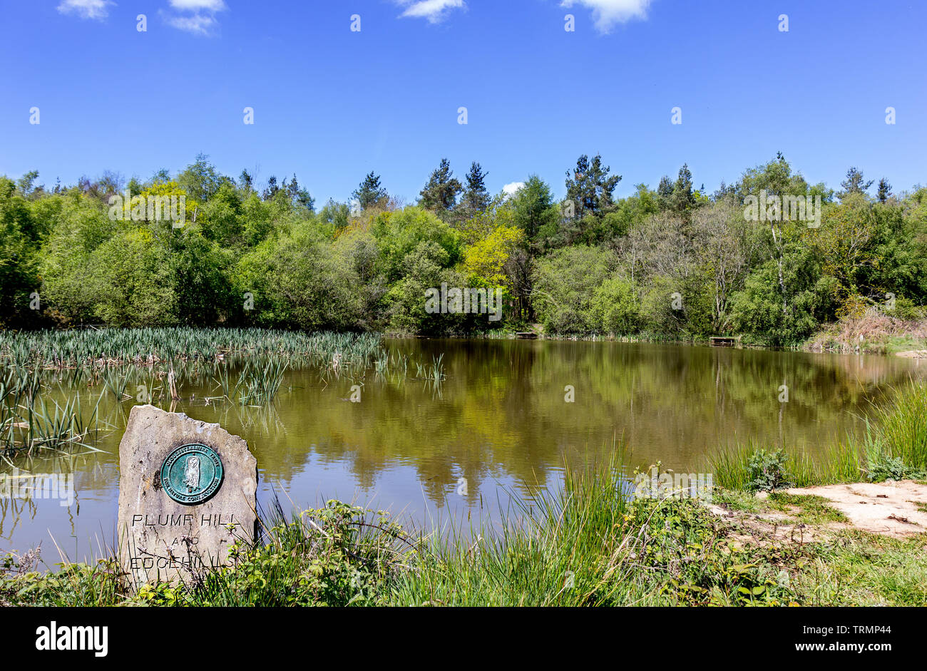 Pond on Plump Hill. - Stock Image