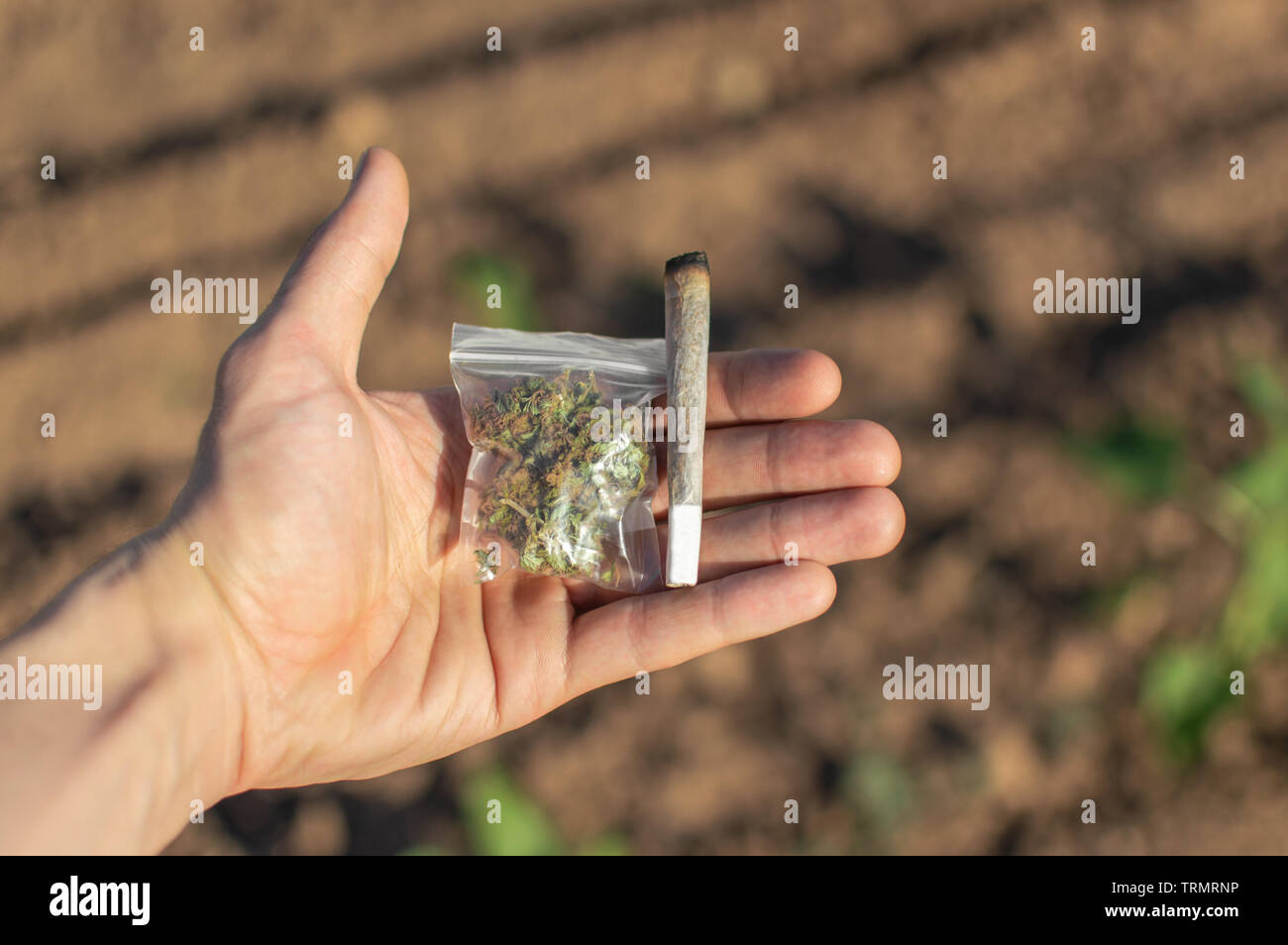 Smoking Marijuana In A Natural Place Hand Of A Man Showing A Big Marijuana Joint And A Plastic Bag With Weed During A Sunny Day On The Street Stock Photo Alamy