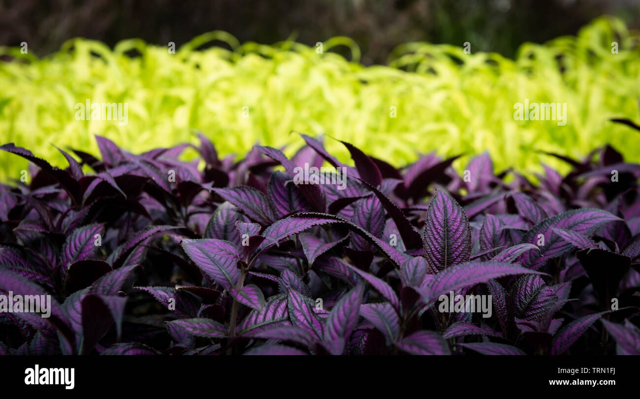 Parkway Garden opens its doors to gardeners to fill their homes with beautiful annuals and perennials. - Stock Image
