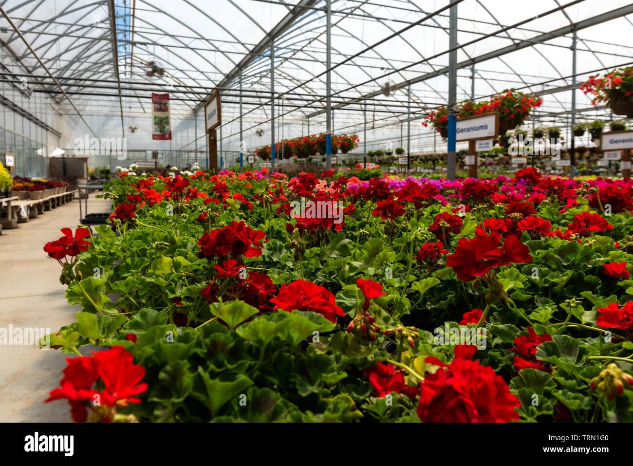 Flower Gardens In London Ontario - Garden Design