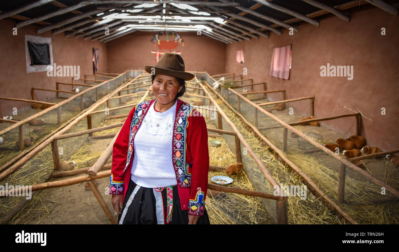 Sacred Valley, Cusco, Peru - Oct 13, 2018: A proud Quechua Andina lady at her guinea pig farm in the Sacred Valley of the Incas - Stock Image