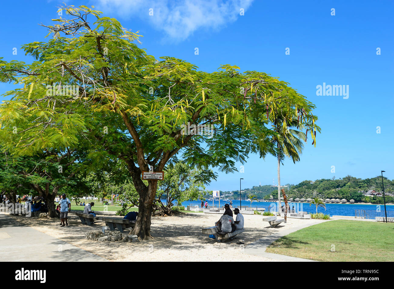 Locals relaxing underneath a Poinciana or Christmans Tree in a park on the foreshore of Port Vila, Vanuatu, Melanesia - Stock Image