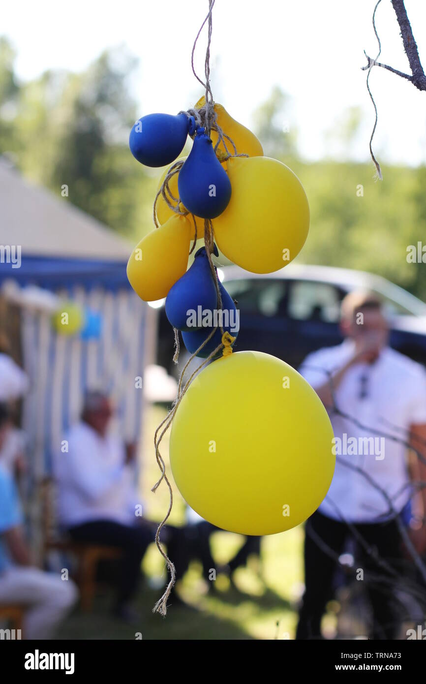 Blue and yellow balloons hanging from a branch at a student party in Sweden. - Stock Image