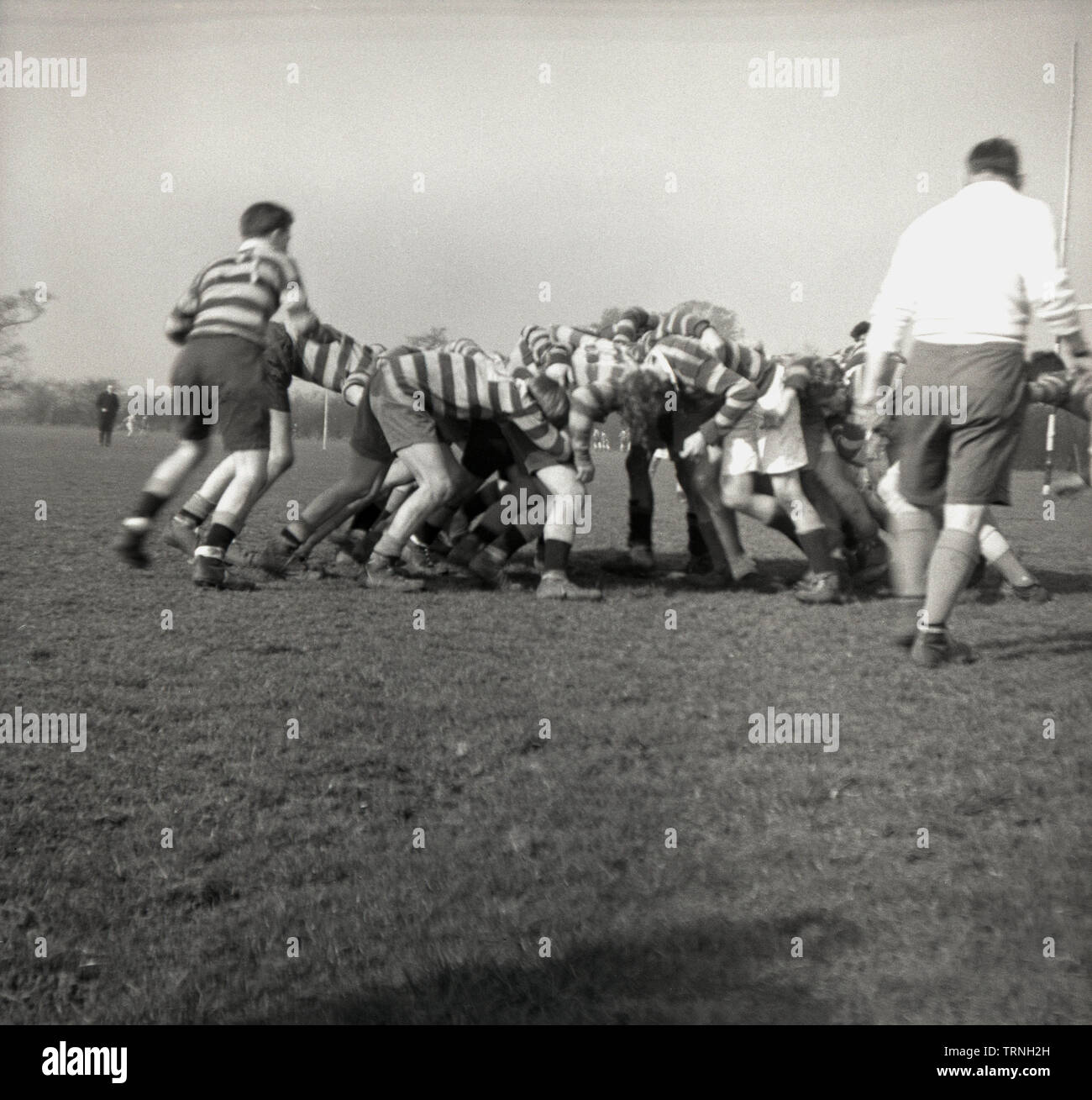 1950s, historical, amateur rugby union match, rugby forwards inter-locked with the oppostion forwards in a scrum, watched over by the referee, England, UK. - Stock Image