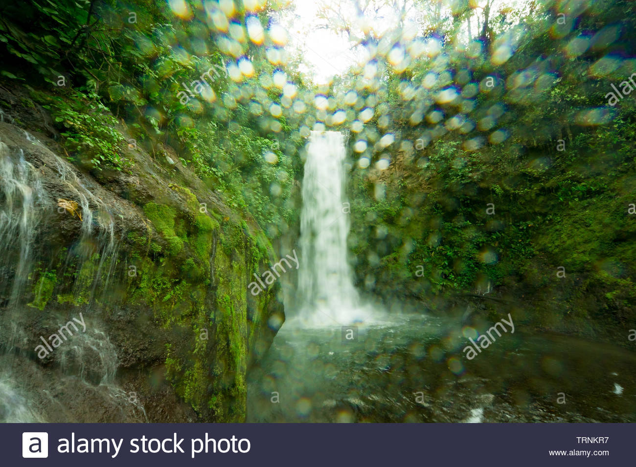 La Paz Waterfall gardens, with green tropical forest in