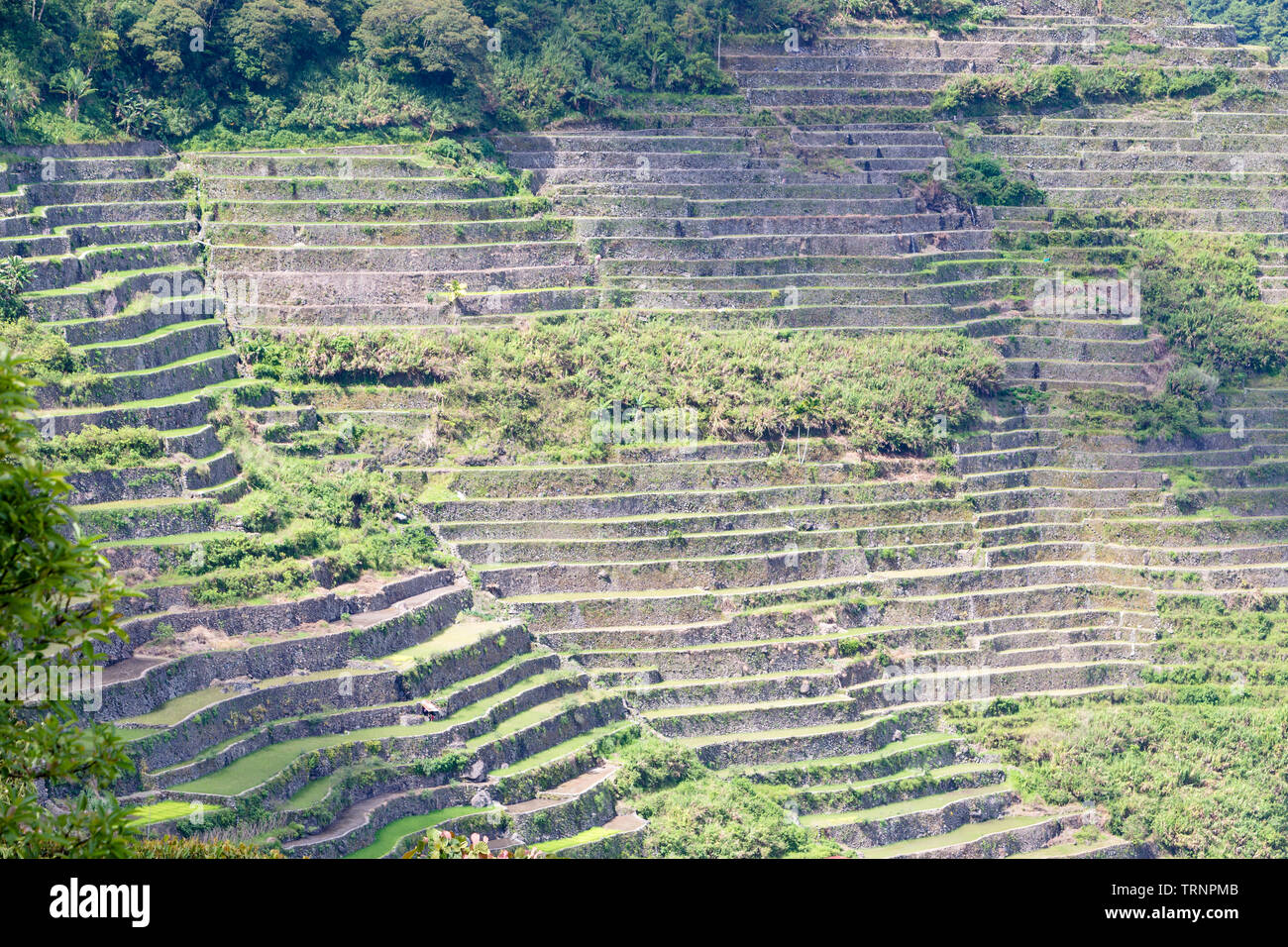 Batad rice terraces, near Banaue, Philippines - Stock Image