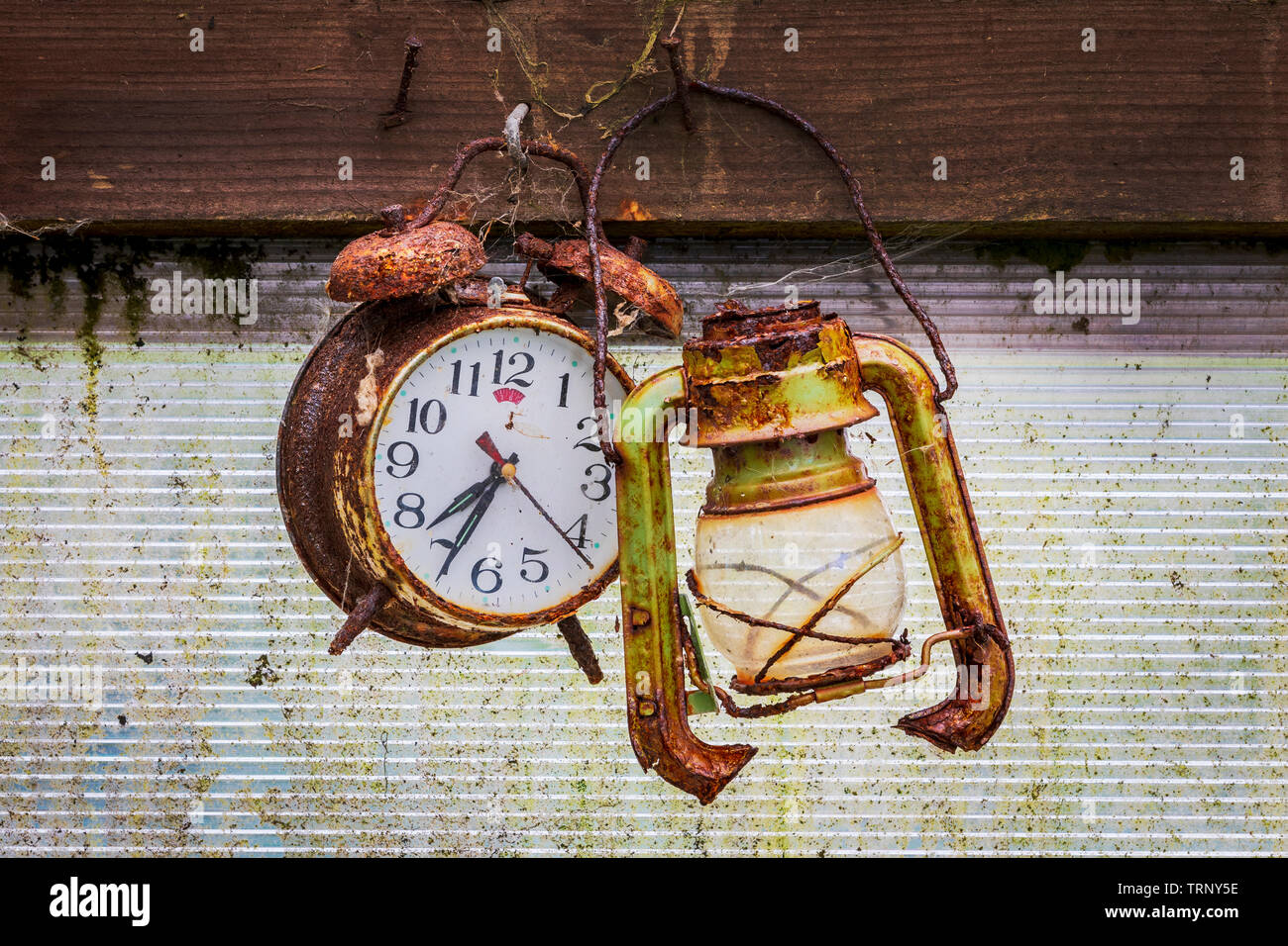 Old and rusty alarm clock hanging on a nail next to an old broken lantern, in a garden shed Stock Photo