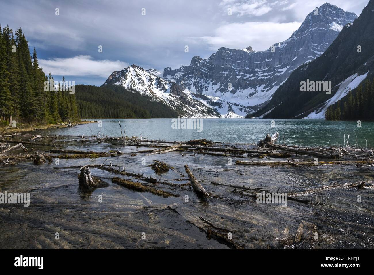 Scattered Driftwood and Scenic Landscape View of Chephren Lake and Rugged Mountain Peaks on Hiking Trail near Icefields Parkway in Banff National Park Stock Photo
