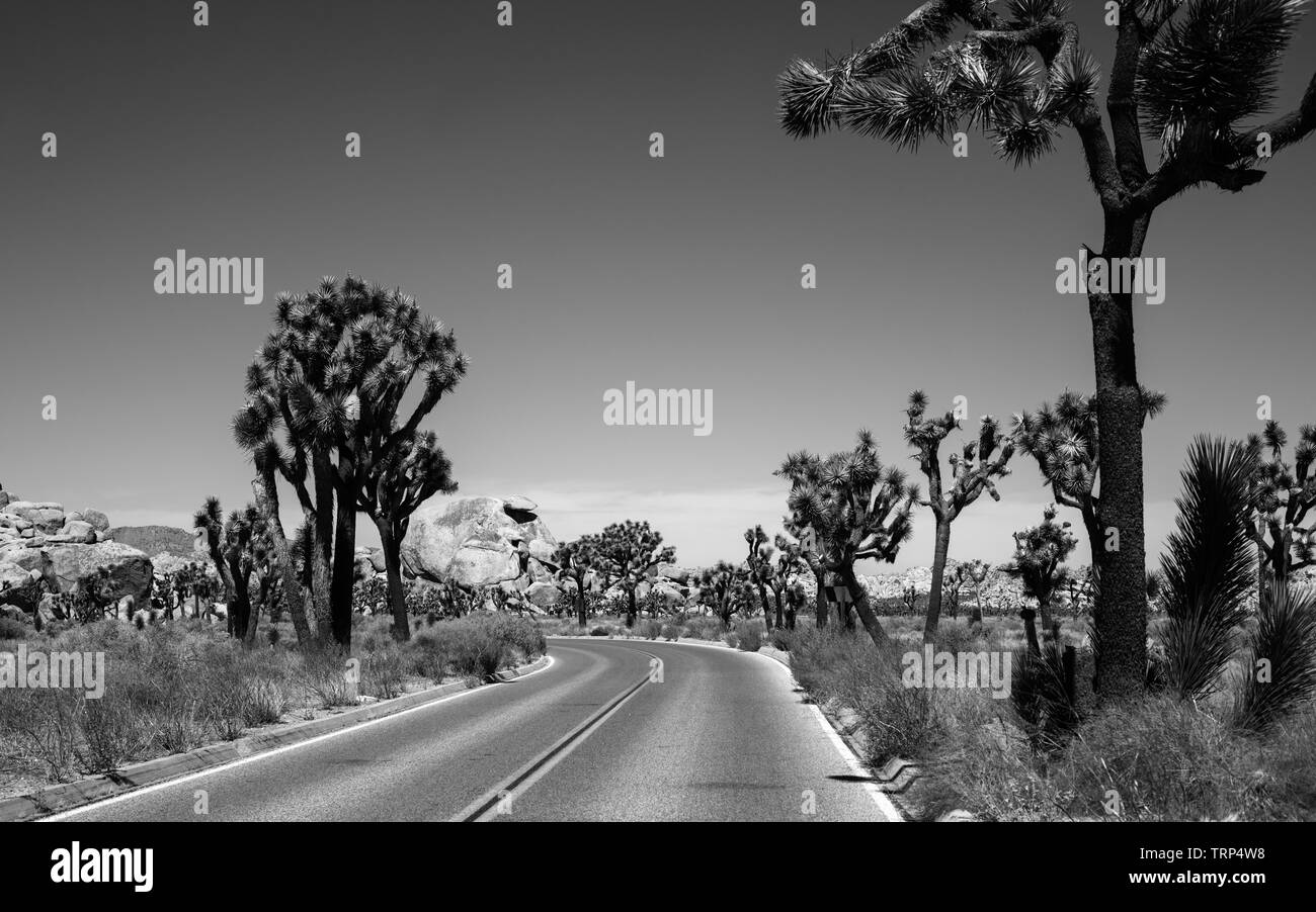 Joshua Tree; Nationalpark,road,rocks,palm,California; USA, - Stock Image
