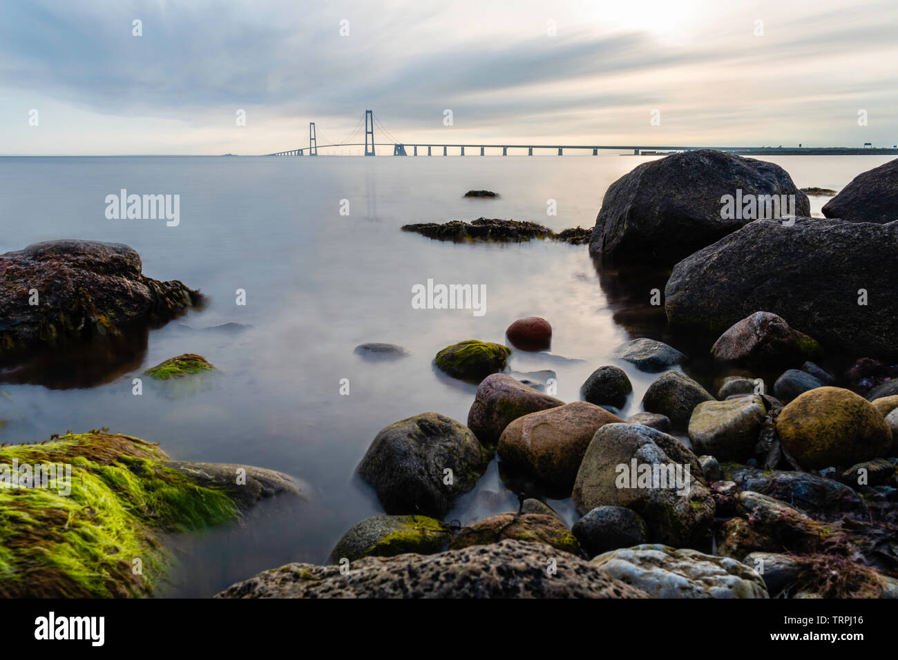 The East Bridge of the Great Belt Bridge from the Granskoven strand in Denmark with colorful rocks and the sea in the foreground - Stock Image