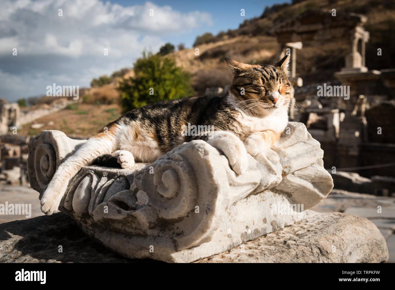 Stray cat basking on an ionic column in the sunlight, Ephesus ruins, Turkey Stock Photo