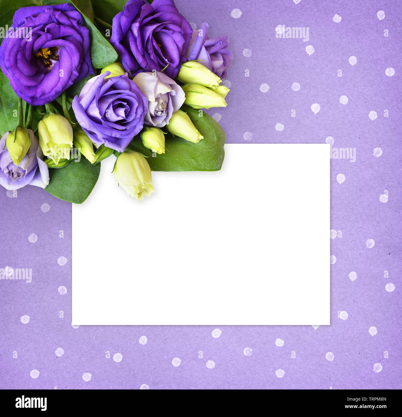 Corner arrangement with purple lisianthus flowers and a white card on polka dot paper background. Flat lay. Top view. - Stock Image