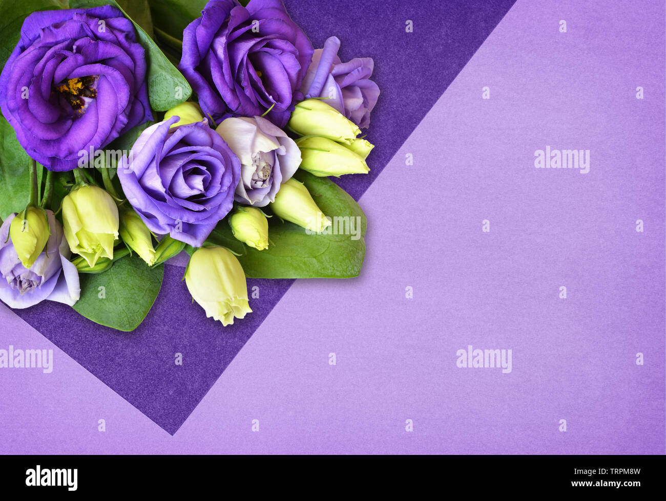 Corner arrangement with lisianthus flowers on modern flat lay background with papers of different shades of purple - Stock Image