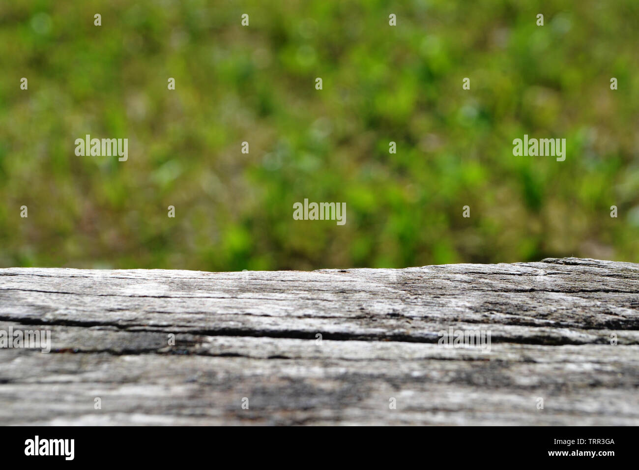 Detail of old wooden bench on blur of fresh green abstract. Stock Photo