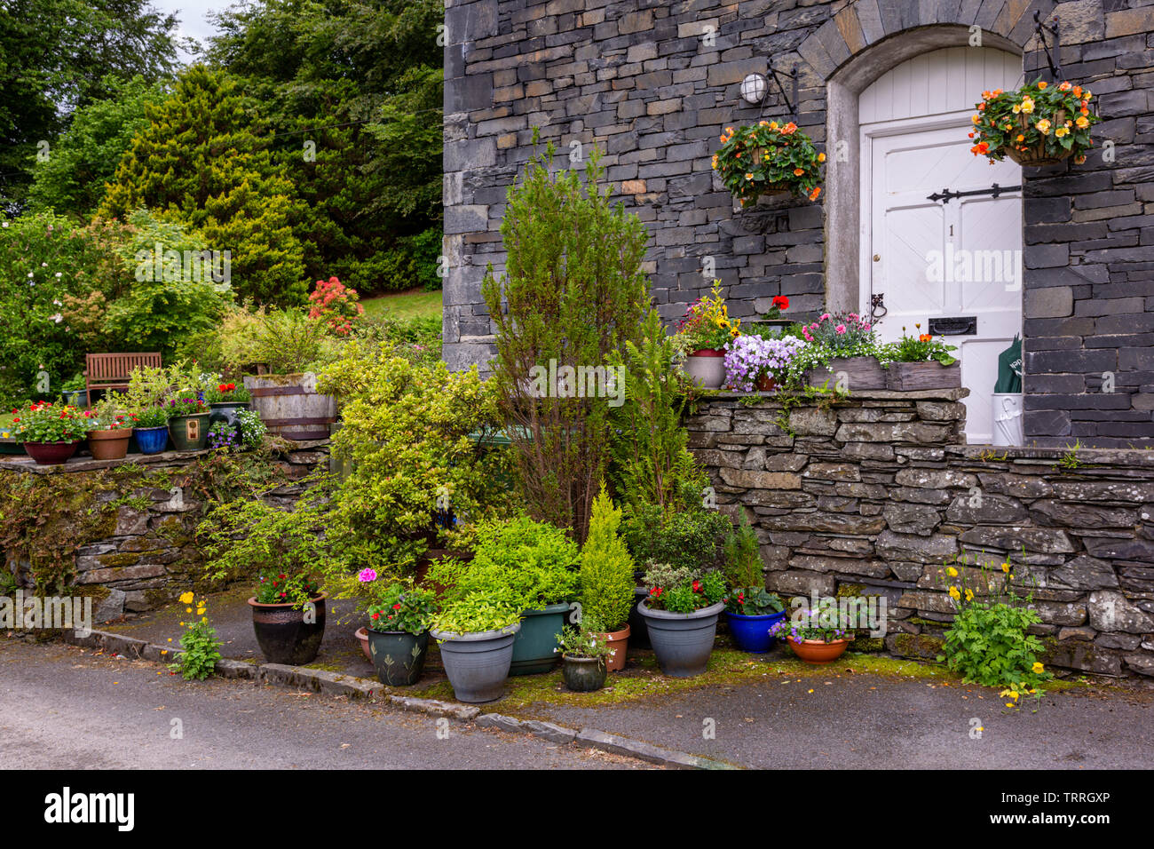 Plants in pots outside in a cottage garden, UK - Stock Image
