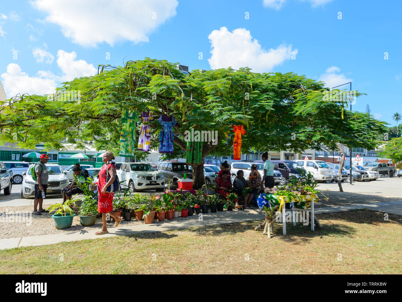 Market stall with dresses and plants for sale underneath a Poinciana or Christmas Tree, Port Vila, Efate Island, Vanuatu, Melanesia - Stock Image