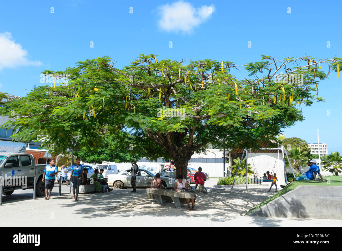 People relaxing underneath a Poinciana or Christmas tree in a public park, Port Vila, Vanuatu, Melanesia - Stock Image