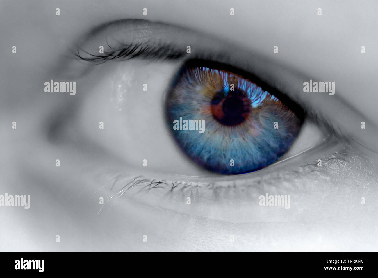 Black and white image of an eyeball with a blue iris.  Selective deep blue color - Stock Image