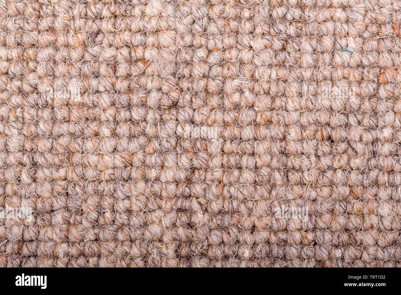As close up of a loop pile wool carpet in neutral, beige and fawn tones. - Stock Image