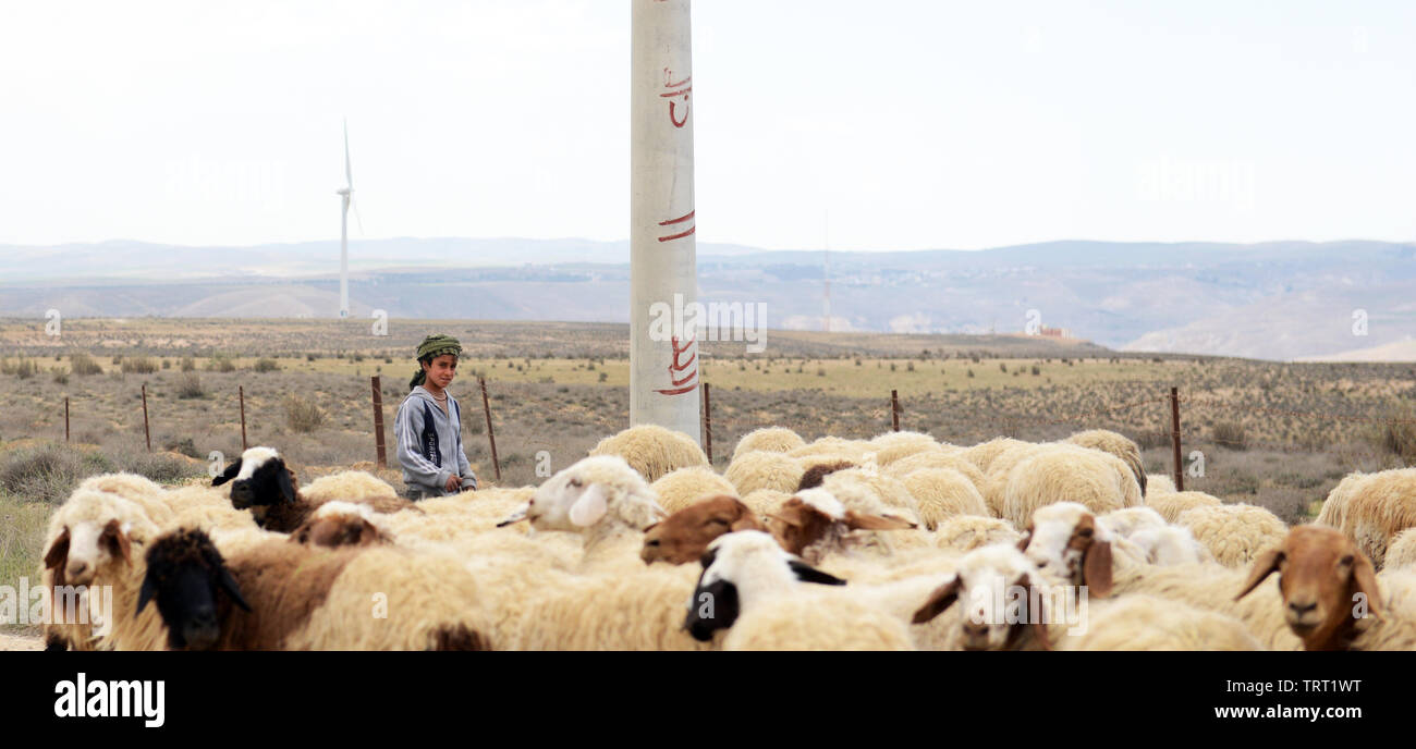 Sheep herding in the mountainous region of central Jordan. Stock Photo
