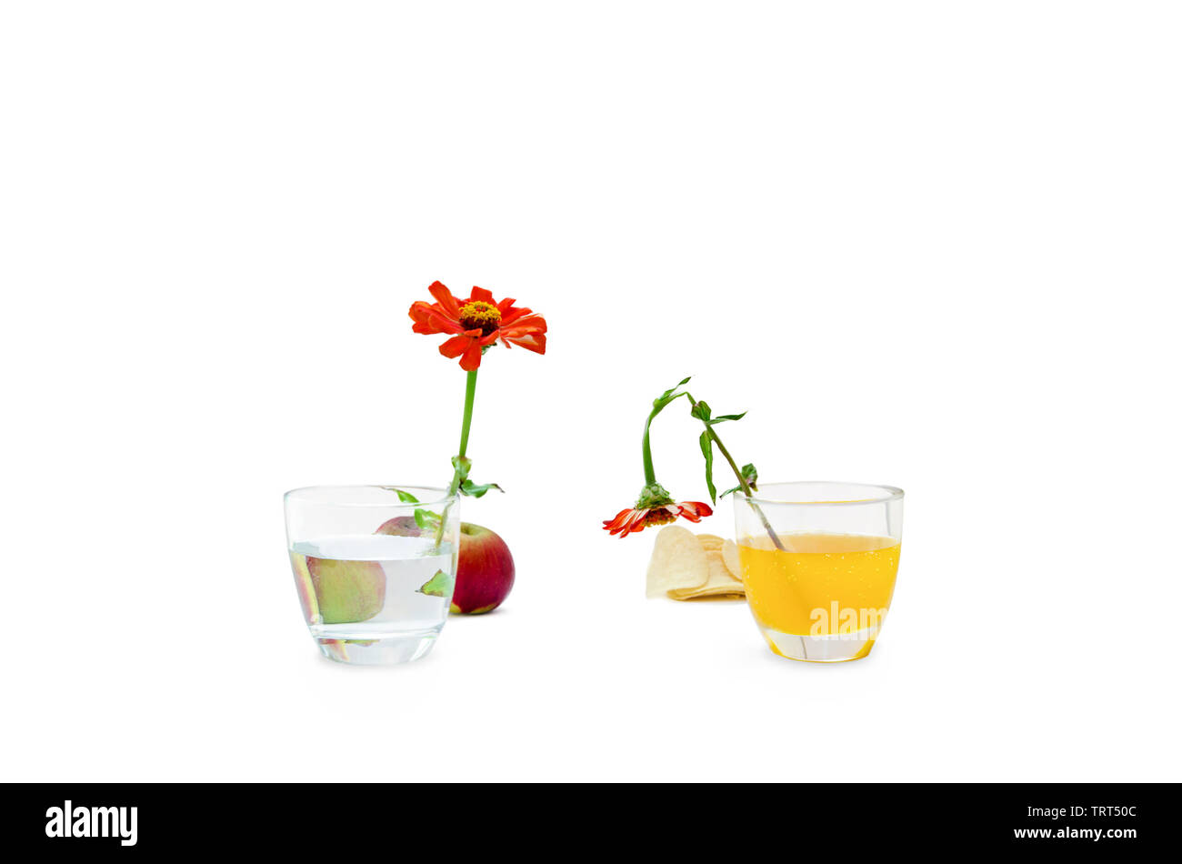 Concept of healthy vs unhealthy food on white background - Stock Image