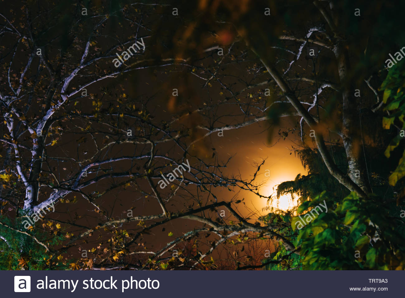 misty forest with moon and stars - Stock Image