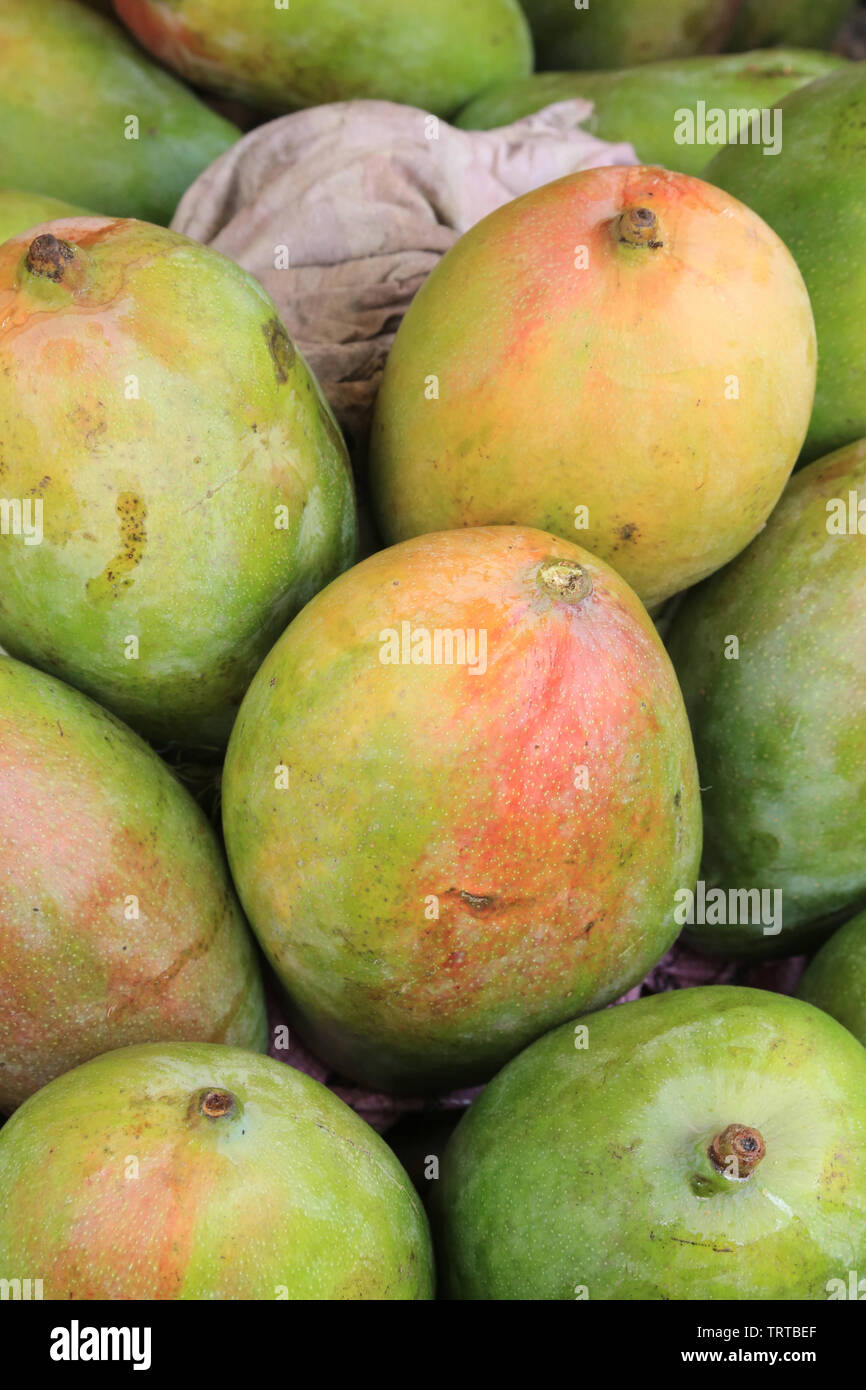 Mangues.Togo. Afrique de l'Ouest. Stock Photo