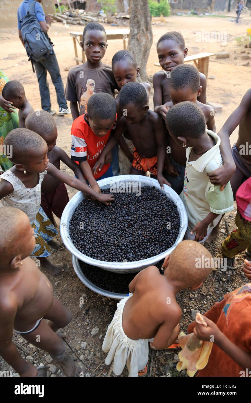 Noix de palme. Dtacha. Togo. Afrique de l'Ouest. - Stock Image