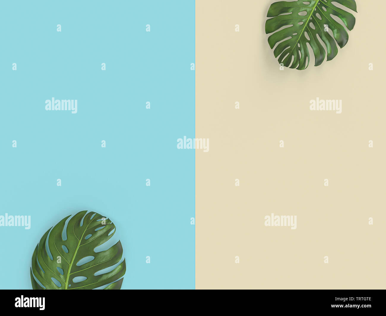 green leaves on two-tone background, 3d render image in flat lay style. - Stock Image