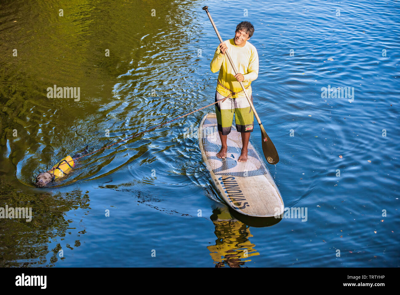 Oahu, Hawaii, USA 10/06/2016.  Man paddle boarding along with dog NorthShore Oahu - Stock Image