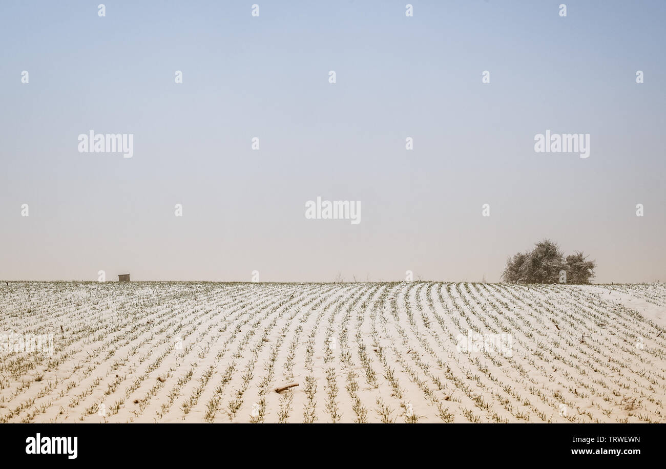 tree on a field covered with snow - Stock Image
