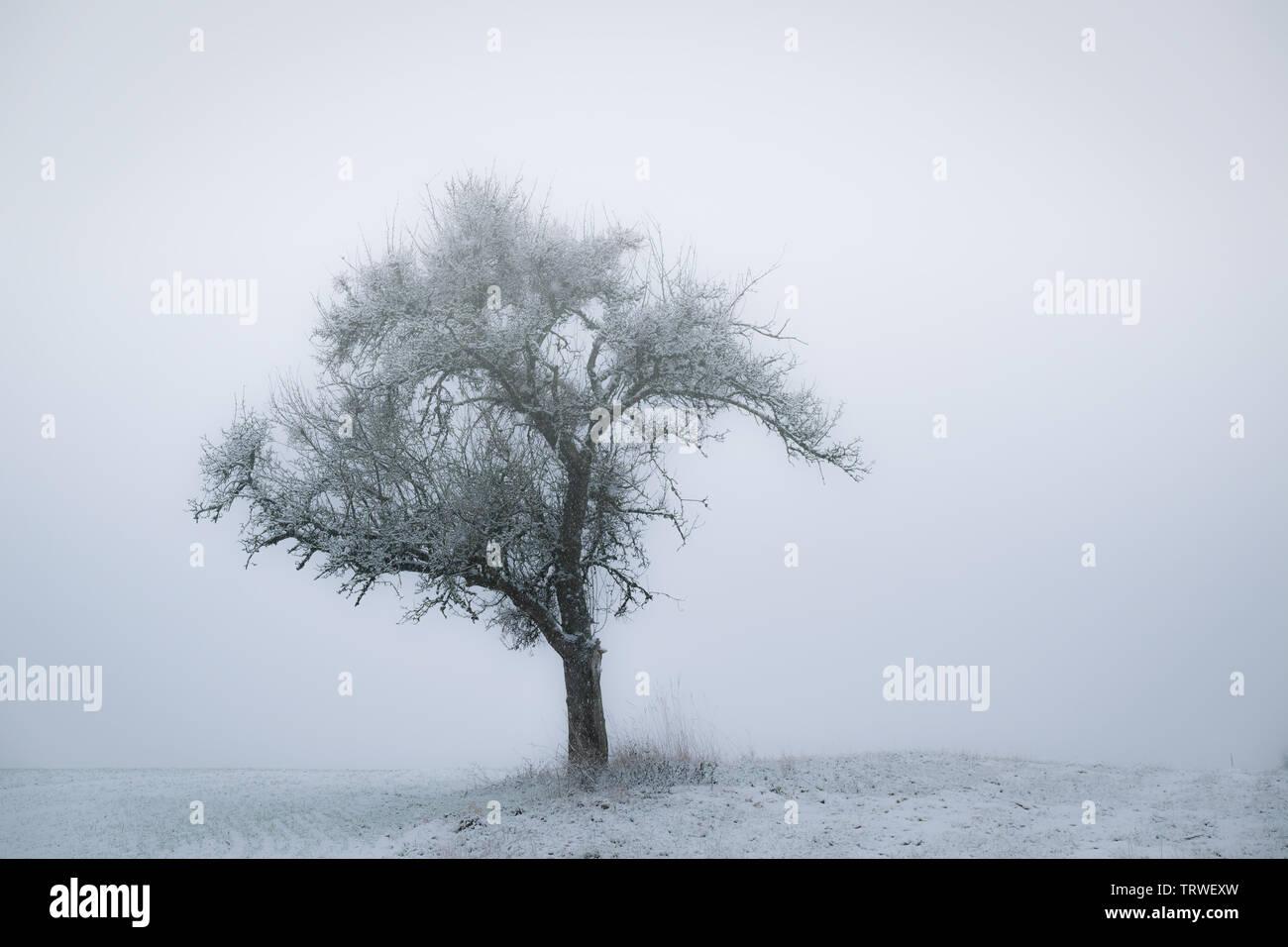 bare tree on field against misty sky in winter - Stock Image