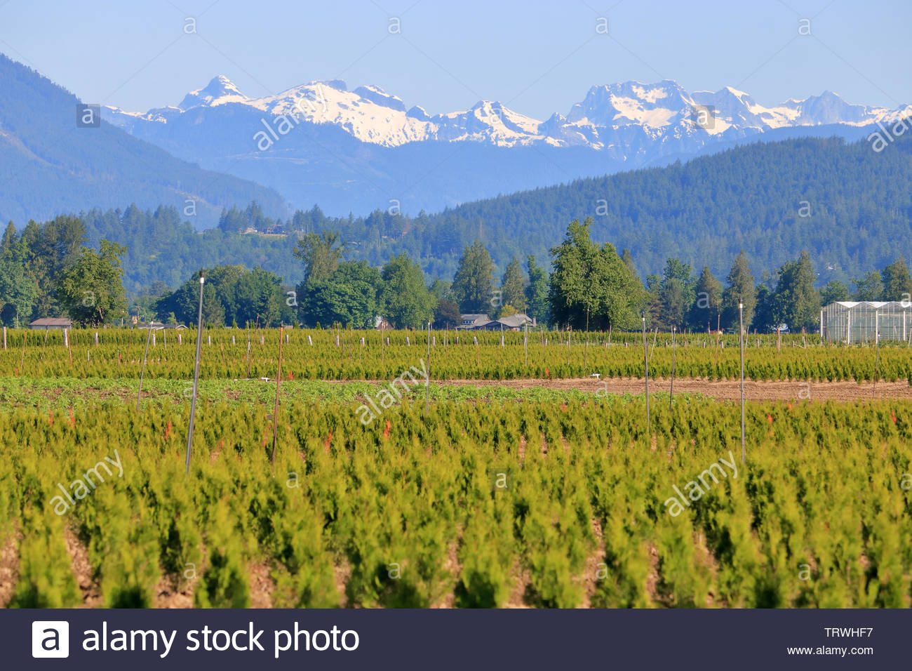 The Northshore Mountain range in southern BC, Canada towers over the Fraser Valley where agricultural land is used for both agricultural and commercia - Stock Image