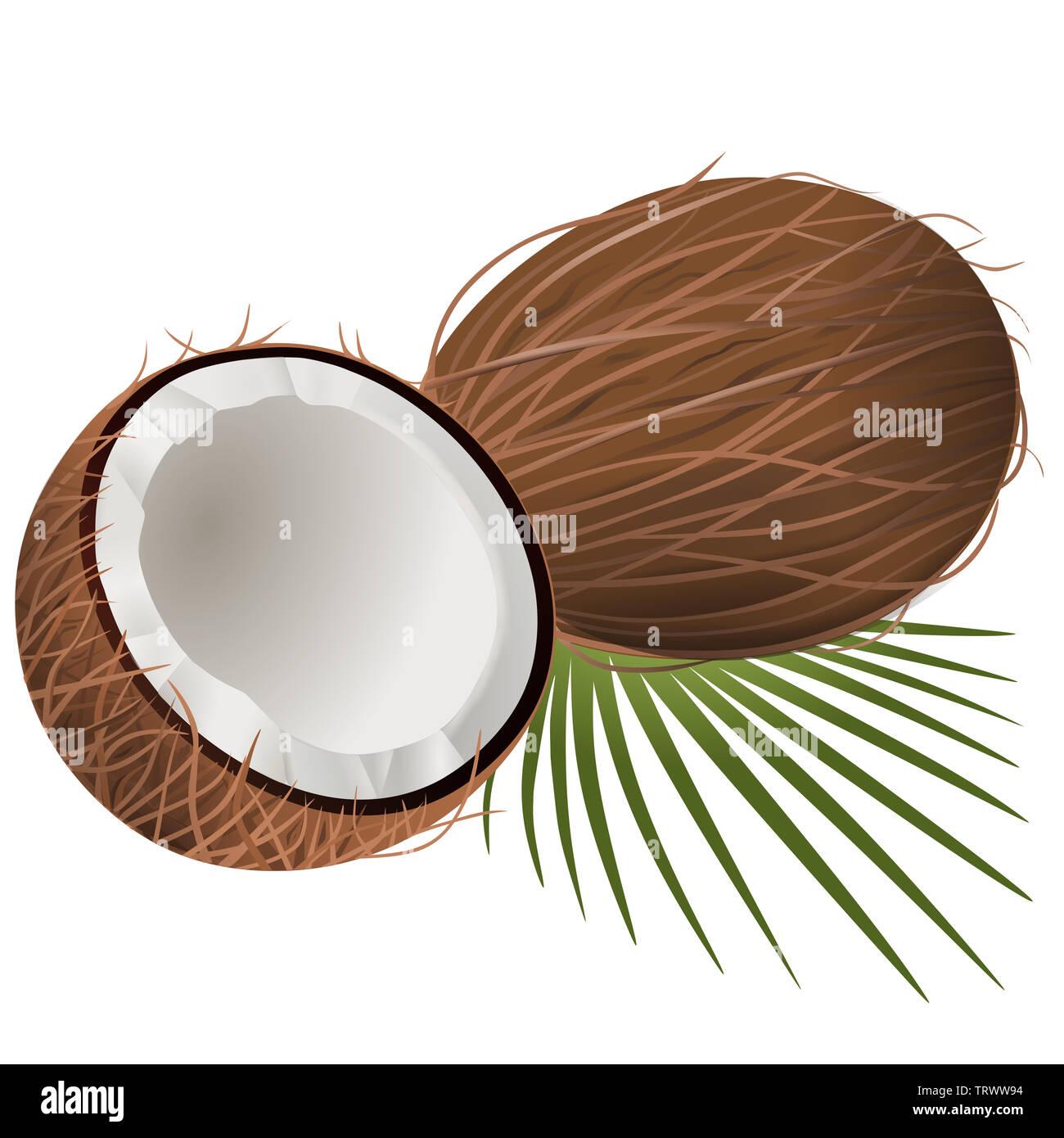 coconut illustration on white background - Stock Image