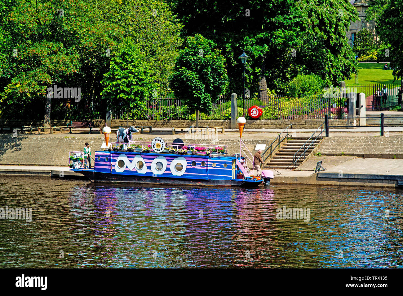 The Full Moo Ice Cream Boat, River Ouse, York, England Stock Photo
