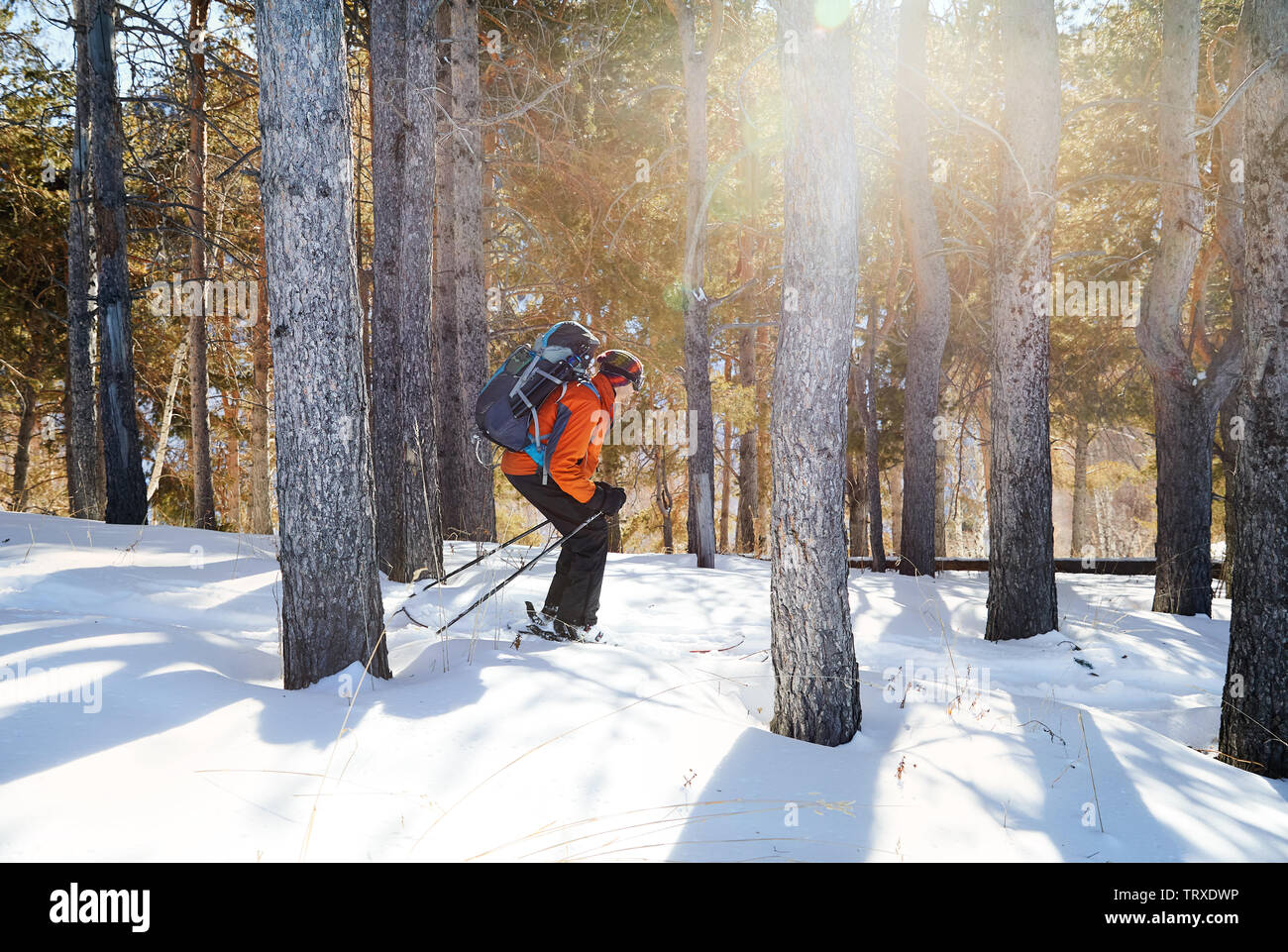 Man in orange jacket skiing on fresh powder snow at winter forest Stock Photo