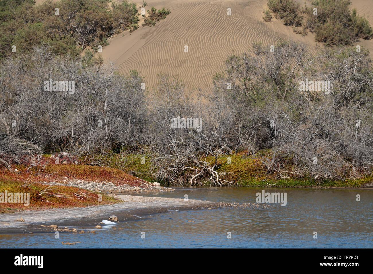 Die Lagune (La Charka) von Maspalomas mit einer Düne im Hintergrund - Stock Image