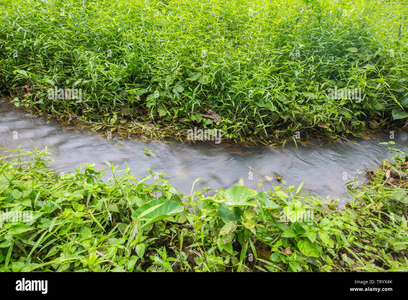 Freshwater stream at Windsor Nature Park in Singapore Stock Photo