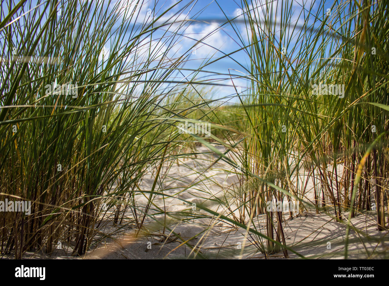 Beach and grass - Stock Image