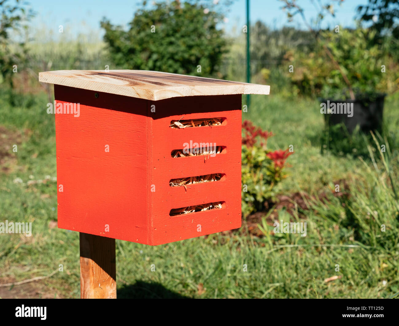 Red box as winter refuge for lacewings - Stock Image