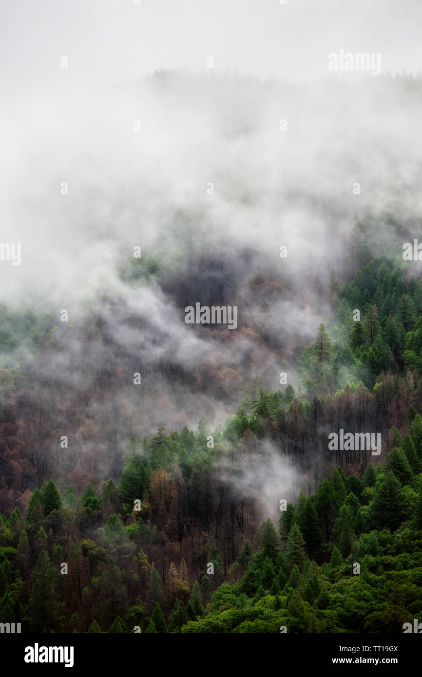 Dramatic Fog And Mist Rolling Over An Evergreen Tree Landscape After A Rain Storm With Room For Text Stock Photo Alamy