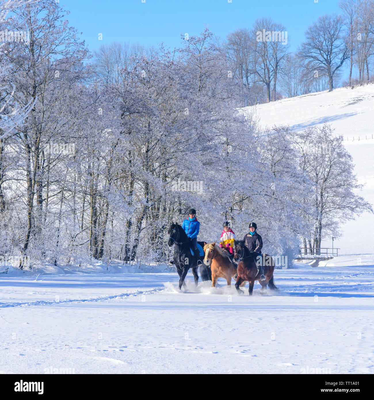 A group of female riders during a tour with the horses into the snowy nature in Allgäu - Stock Image