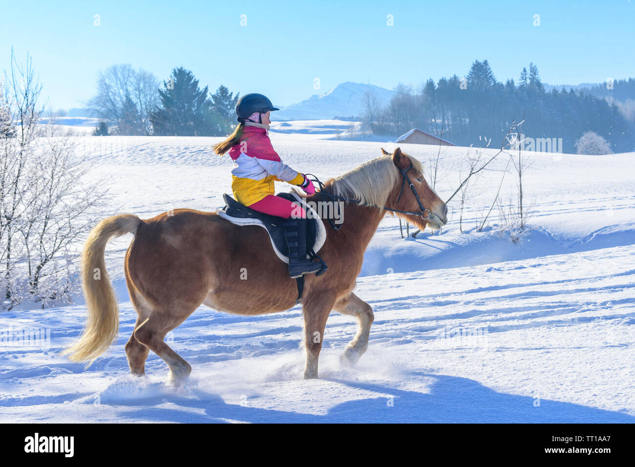Young girl during ride-out with her horse into the snowy nature in Allgäu - Stock Image