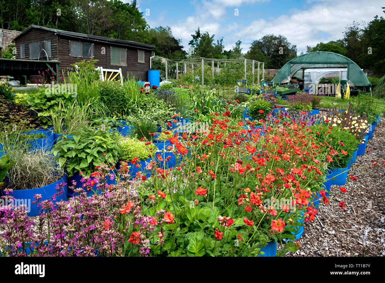 A variety of flowers growing in containers in part of SAMH(Scottish Association for Mental Health)  Redhall Walled Garden, Edinburgh, Scotland, UK. - Stock Image