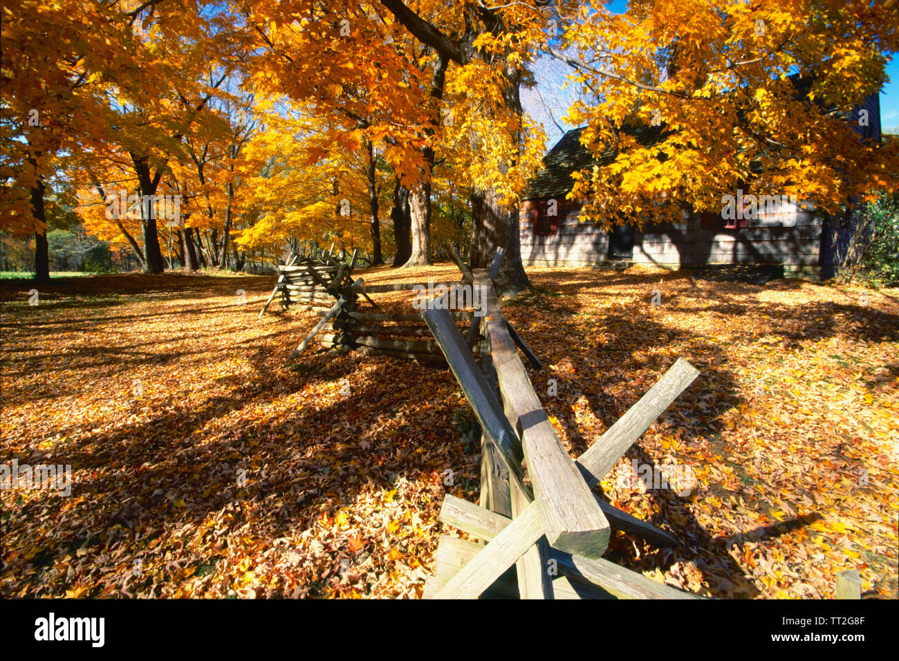 Leaves Covered Road, Wick Farm, Jockey Hollow State Park, Morristown, New Jersey Stock Photo
