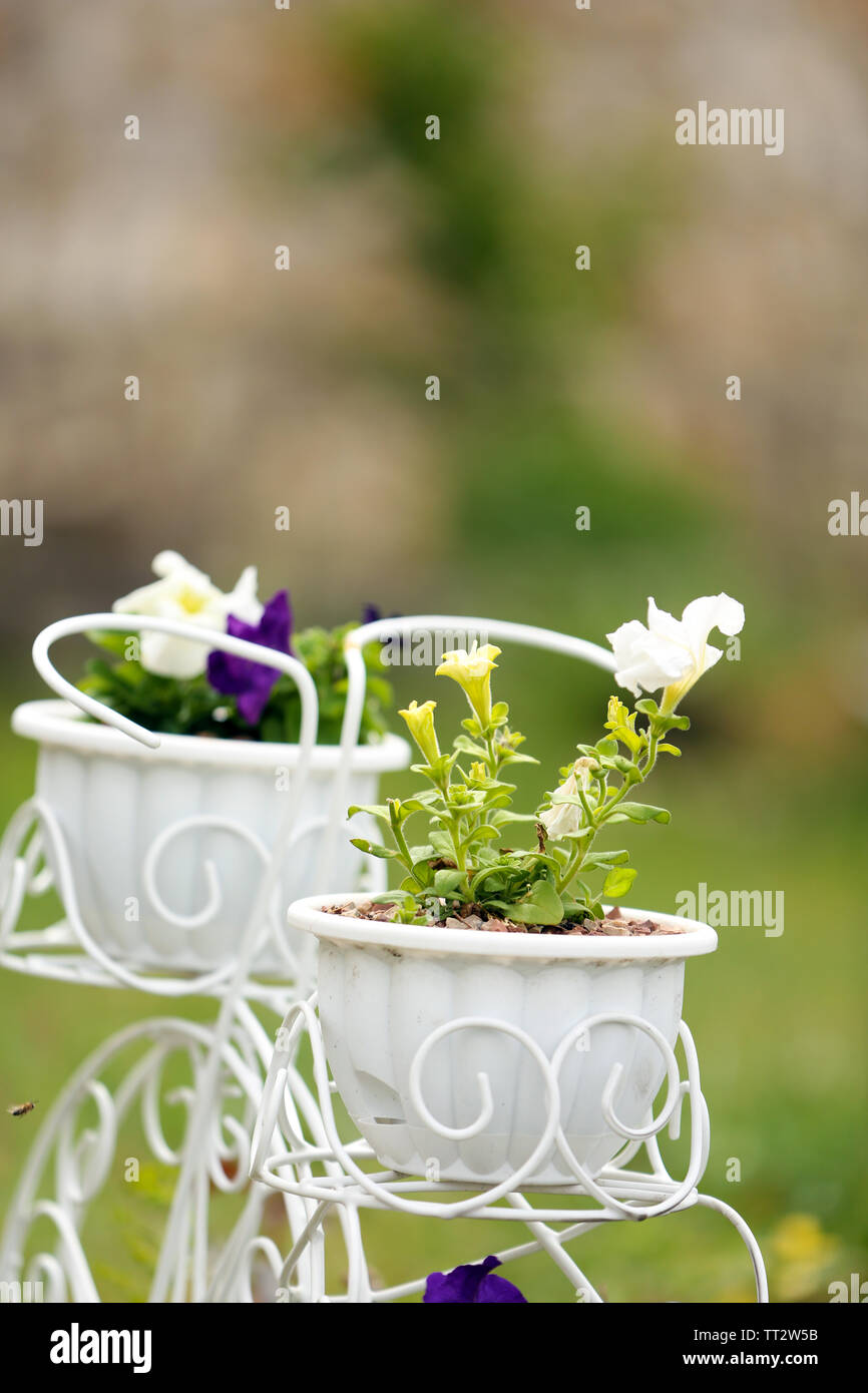 Flowers In Decorative Flower Pots Outdoors Stock Photo