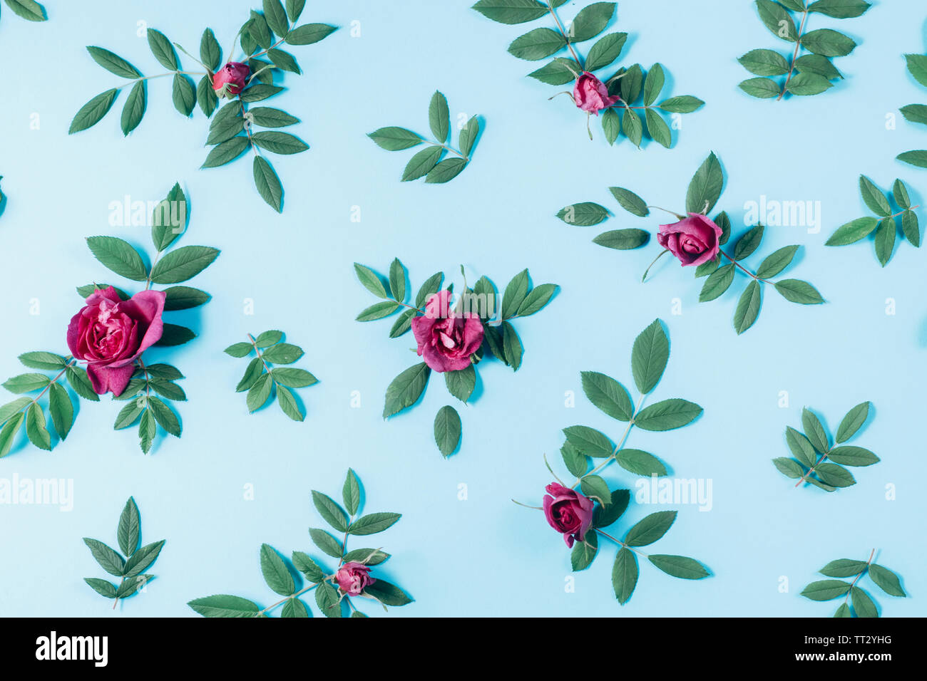 Floral pattern made of red roses, green leaves, branches on pastel blue background. Flat lay, top view. Nature background. Pattern of flowers. Flowers Stock Photo