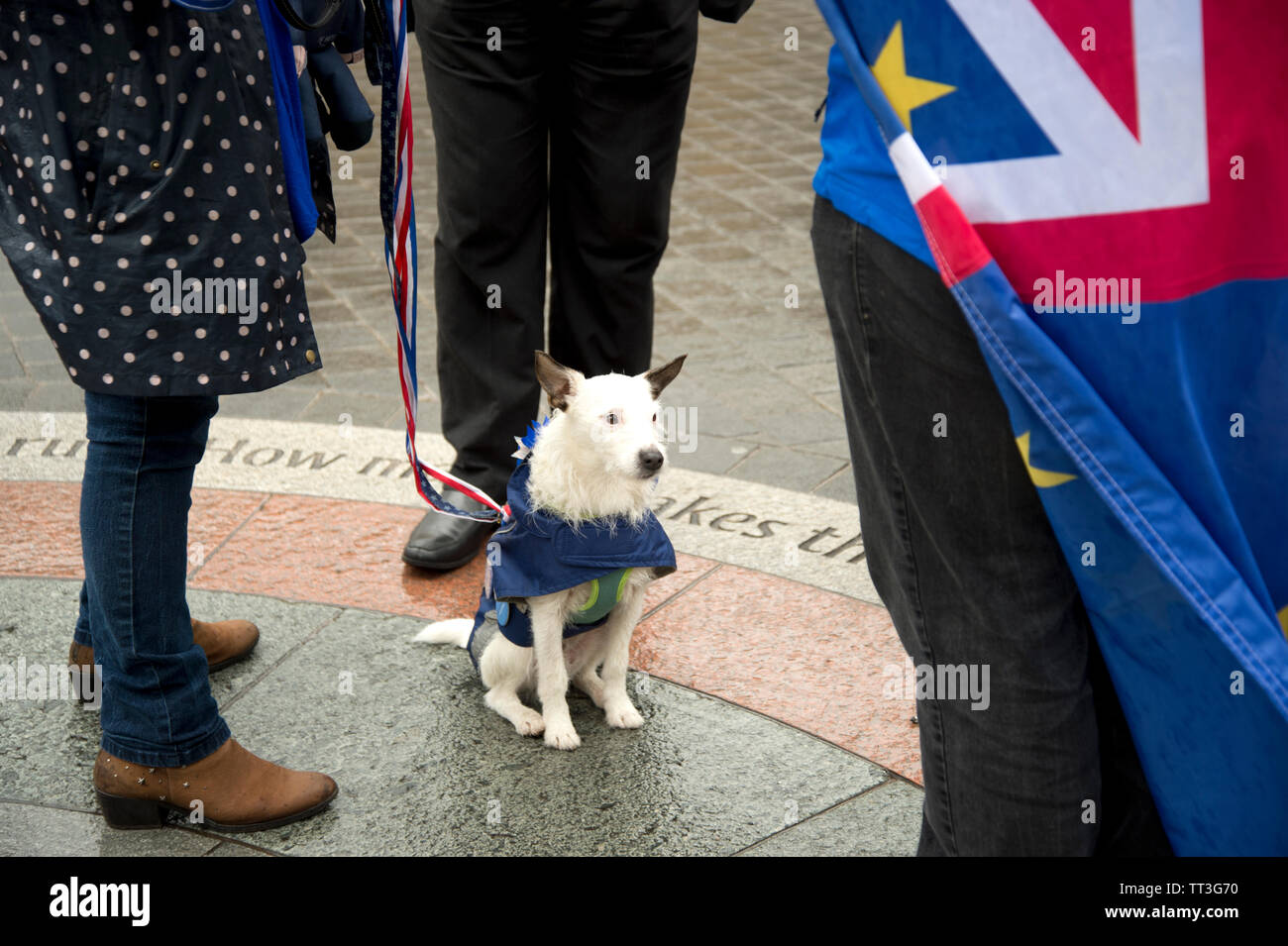 Parliament Square. Protest by Remain supporters. A dog sits patiently whilst protesters chat. - Stock Image