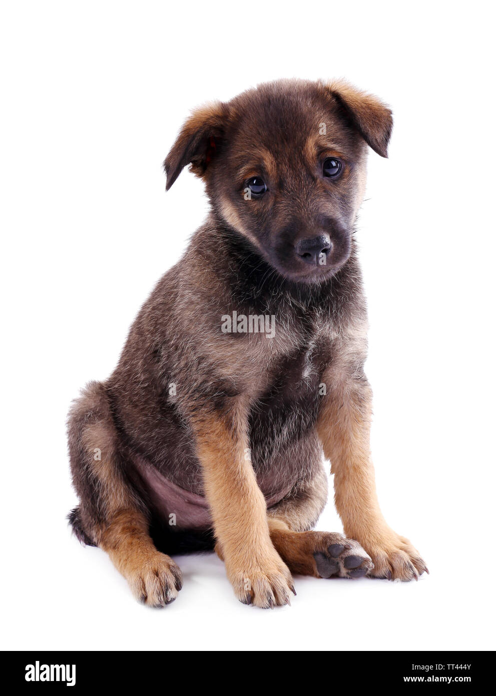 Funny puppy isolated on white - Stock Image